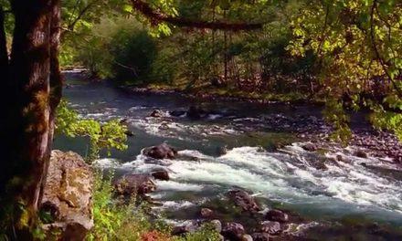 beautiful video on gratitude